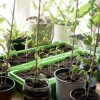 A Guide to Growing Vegetables Indoors for Beginners